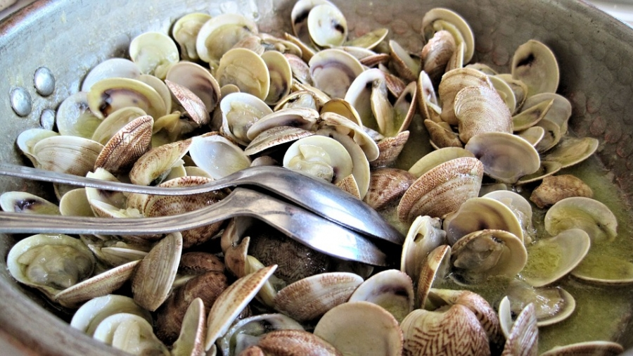 steamed-clams-603110_960_720